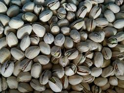 Fresh! Pistachios Roasted Salted In-Shell Choose Your Weight