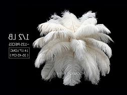 """Moonlight Feather   1/2 lb - 14-17"""" Off White Large Ostrich"""