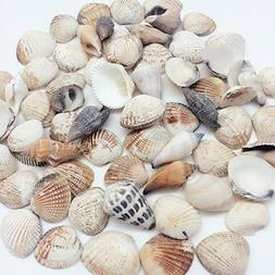 PEPPERLONELY Philippine Natural Sea Shells Mixed, Small, 1 I