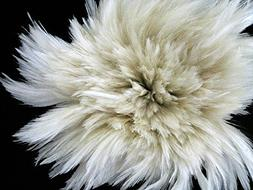 1 Yard - Natural White Strung Rooster Neck Hackle Wholesale